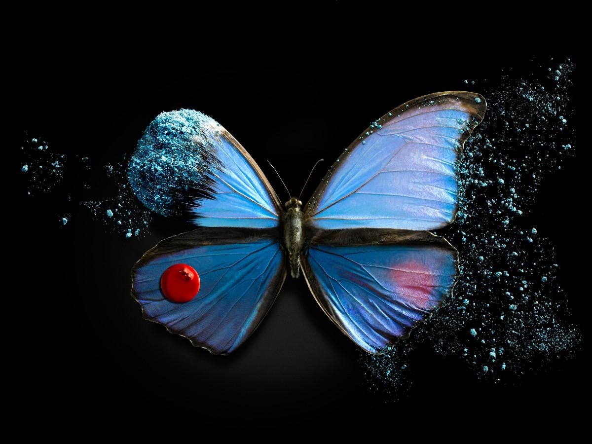 Butterfly#01