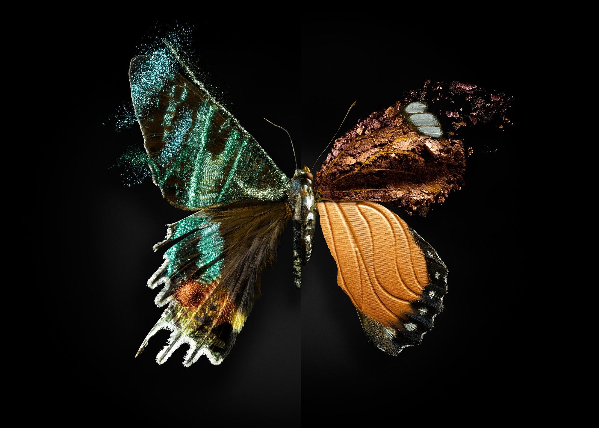 Butterfly#02