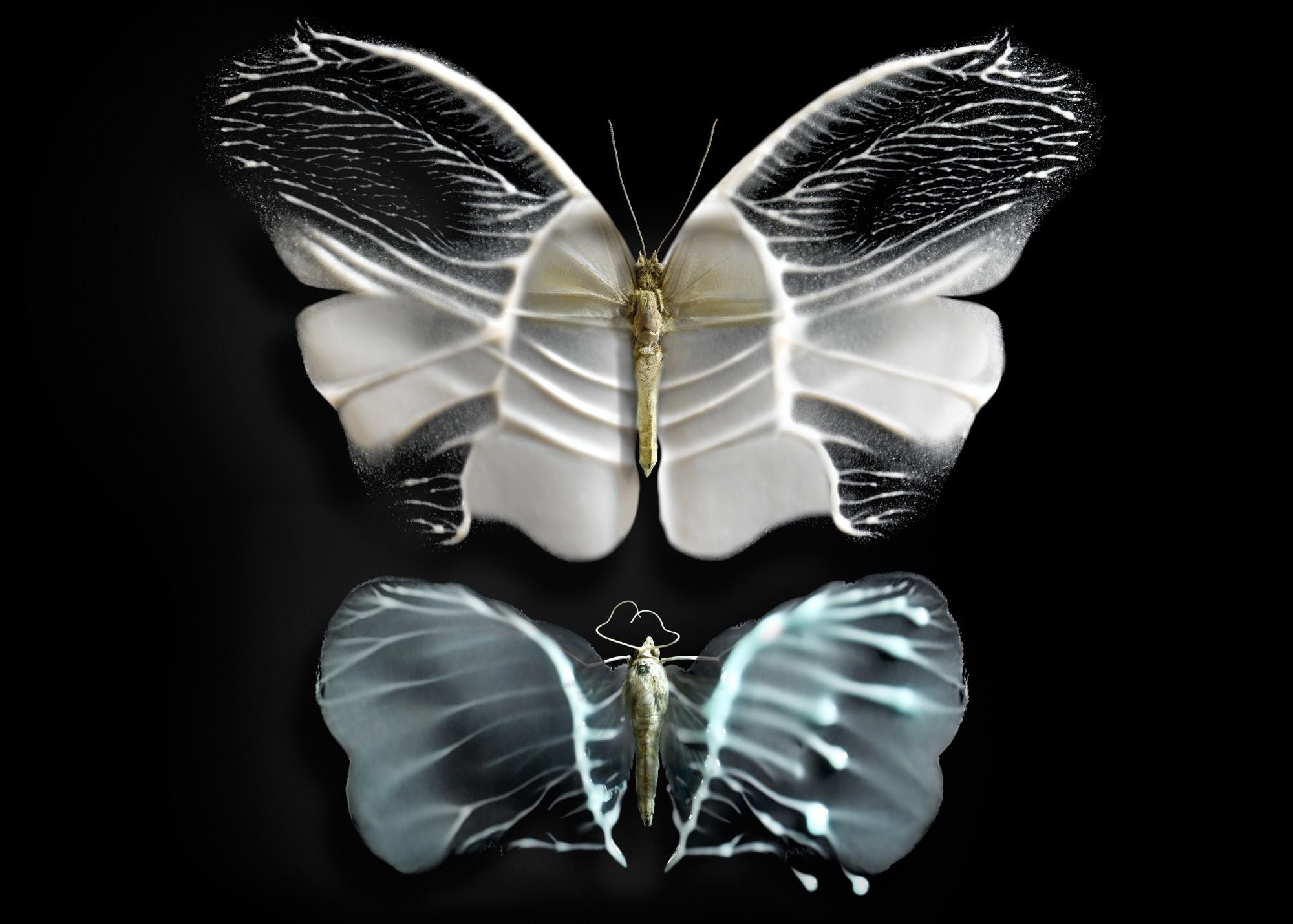 Butterfly#04